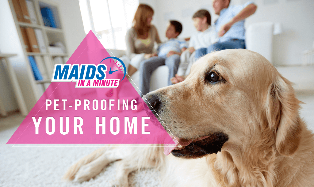 Maids-in-a-Minute-2-Pet-Proofing-Your-Home